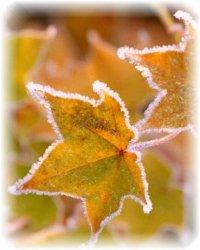 По Ленобласти до минус 4, снег с дождём, сильный ветер, на дорогах гололедица