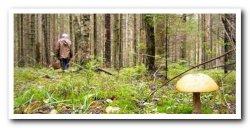 В Ленобласти отменили ограничение на посещение лесов
